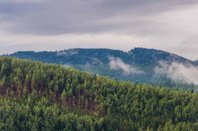 1 млрд деревьев зеленский